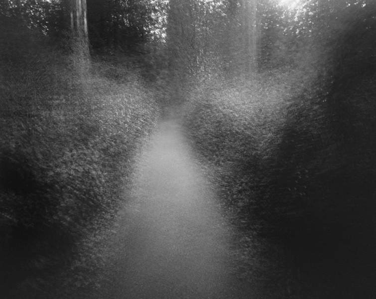 Forest # XVII, 1999