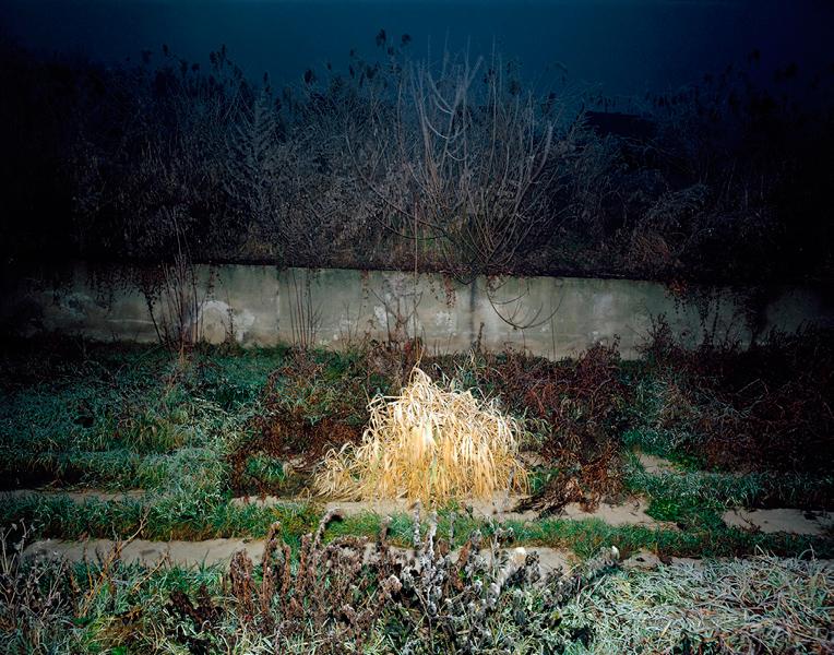 Vegetation # I, 1998