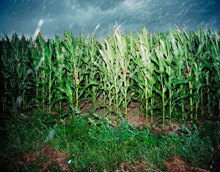 Agraria # XIII, 2005