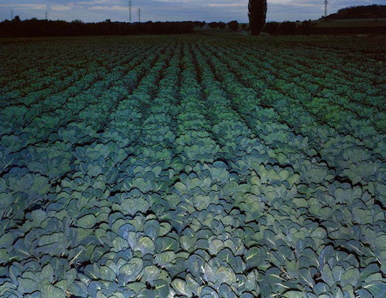 Agraria # XI, 2004