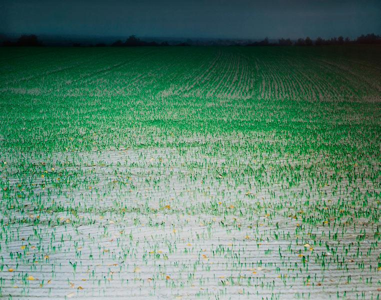 Agraria # III, 2004