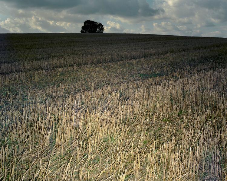 Agraria # V, 2004