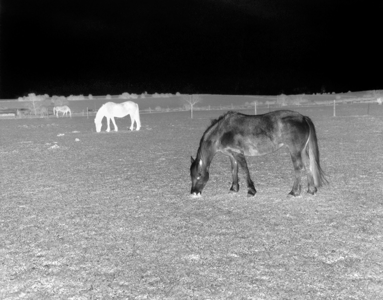 Black Horse, Black Night (White Horse, White Day), 2011